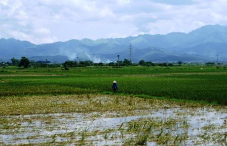 Rismark, Vietnam. For en generation var sult ikke unormalt i Vietnam. Det kommunistiske styre beslaglagde det meste af høsten for at skaffe penge til den industrielle revolution, som i sidste ende skulle føre til et kommunistisk himmerige, men resulterede i at bønderne ikke dyrkede jorden. Siden midten af 1990'erne har de fået lov til at beholde langt mere af udbyttet - og ligefrem eje deres marker - hvilket har gjort Vietnam til en af verdens største riseksportører.