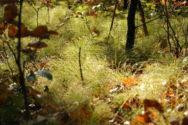 Efterårets skovbund i Ringemose Skov på Syddjurs. Foto, Lone Hartmann