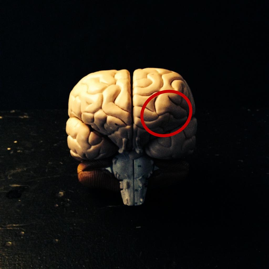 Figur 2. Forreste venstre del af prefrontal korteks, hvor Schjødt fandt øget aktivitet, når forsøgspersonerne var skeptisk indstillede over for bønnernes virkning. Det er et område, man mener er med til at holde umiddelbare sansninger op mod vores erfaringer af verden. Min illustration.